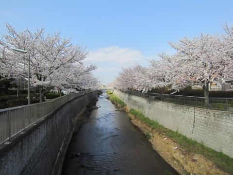 h26,4桜