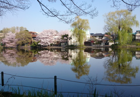 h26,4花見石神井公園