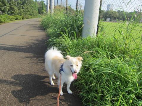 h26,7アローの朝散歩 公園2
