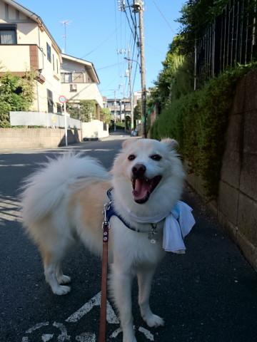 h26,8猛暑の朝散歩3