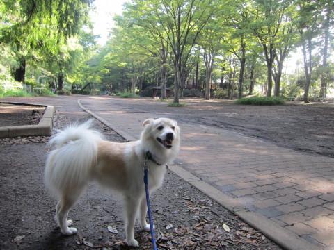 h26,p朝散歩公園