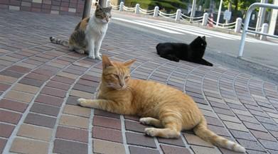 3cats391.jpg
