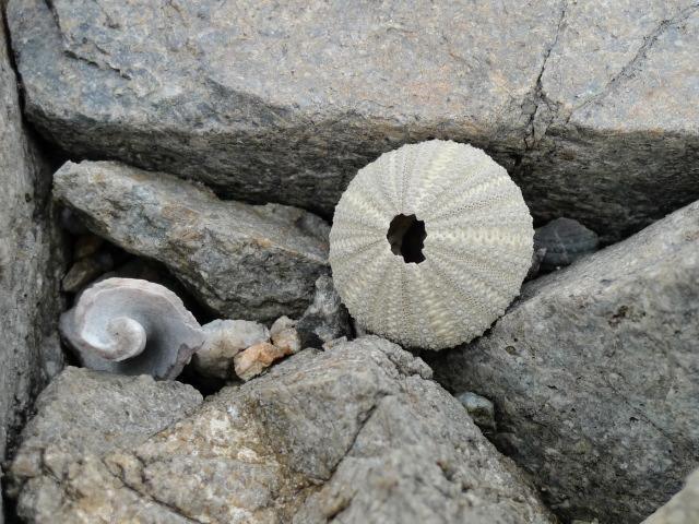 L1070666 貝殻