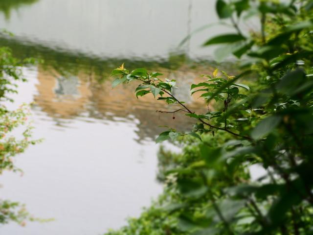 P5270097 池の家1
