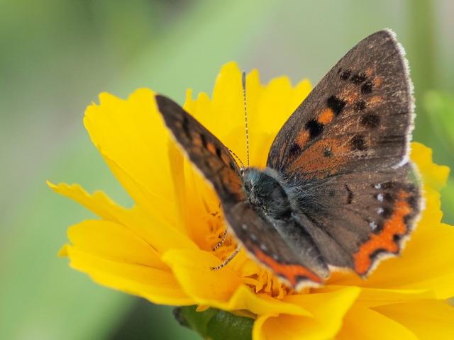 P6130311 花と蝶1