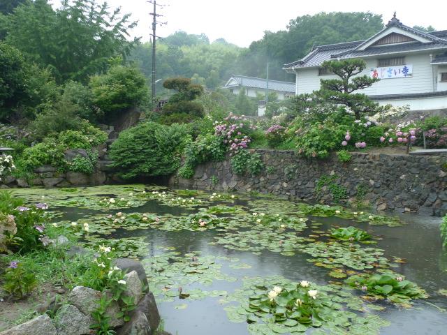 L1080416 紫陽花寺と池