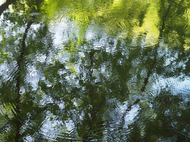P7150137 湖面の波紋