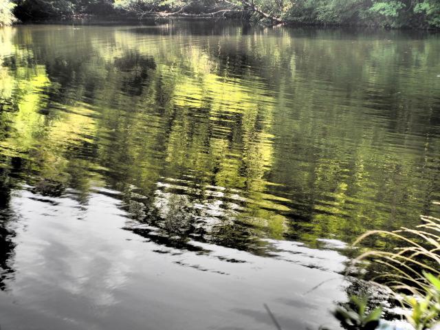 P8190170 湖面T