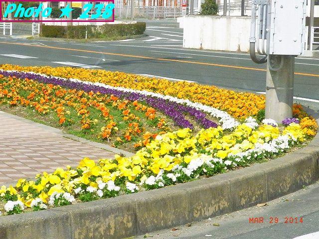 駅前の花壇。