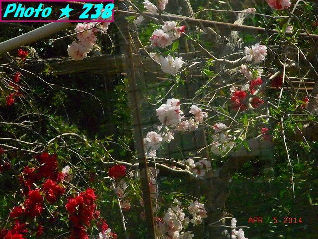 綺麗な庭②