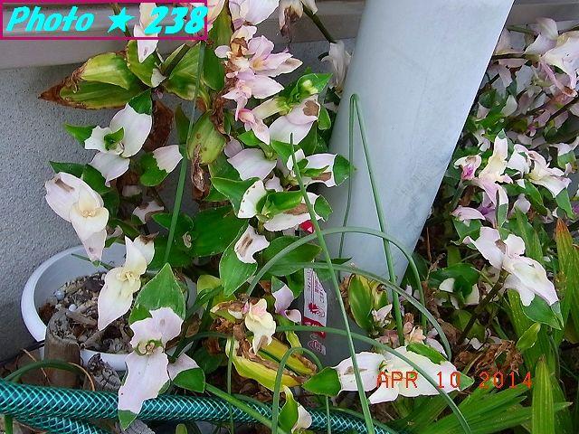 笹の葉+花その2