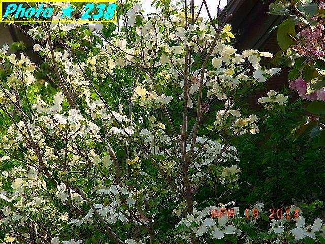 名も知らぬ白い花