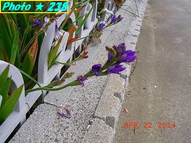 アップの紫花