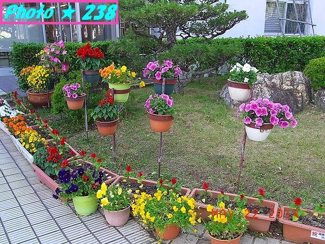 市役所の前の花♪