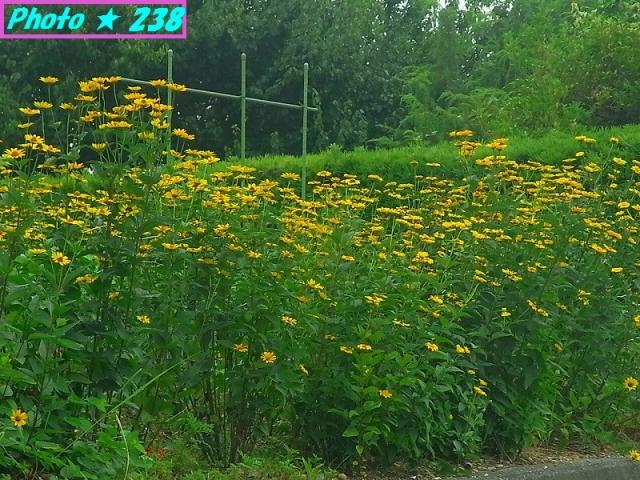 初夏の花-1