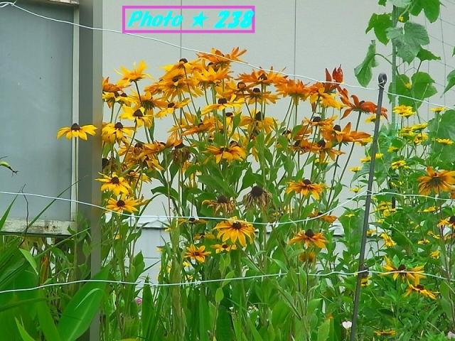 初夏の花-2