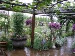 庭園(5)