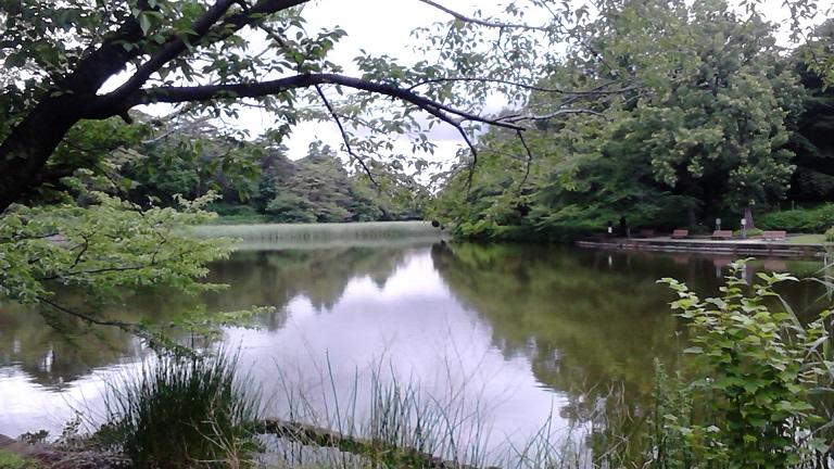 20140628大宮公園