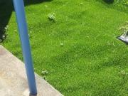 人工芝の上から草が・・・