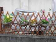 2014/8/10購入の花