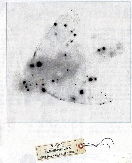 東京新聞4月19日ビジュアル夕刊「放射線を撮る」