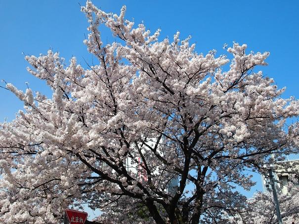 noppblog20140413_002