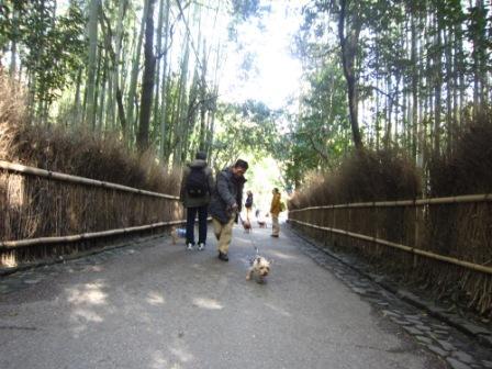 京都ミィ・まー家IMG_7777 - コピー (2)