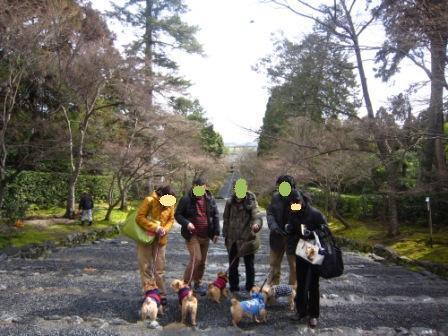 京都ミィ・まー家IMG_7830 - コピー (2)
