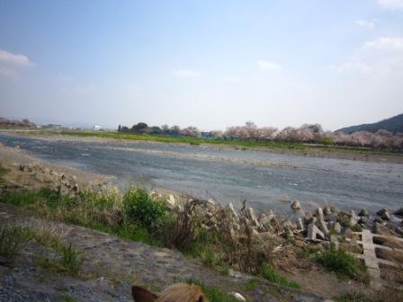 桜チャッピー家IMG_8104 - コピー