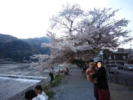 桜チャッピー家IMG_8109 - コピー