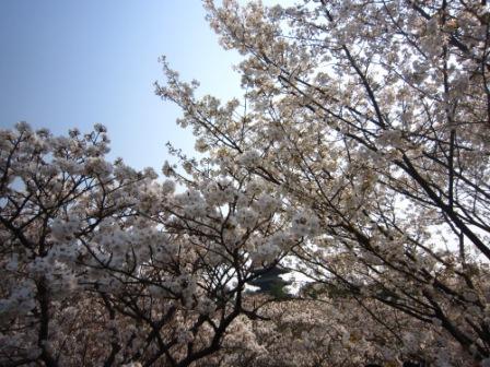 チャッピー仁和寺IMG_8194 - コピー