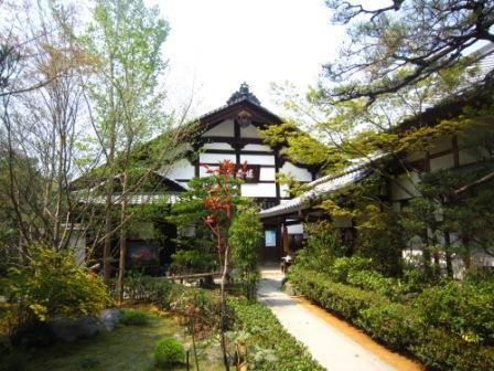桜退蔵院IMG_8220 - コピー
