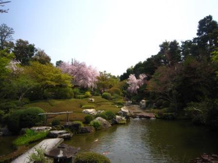 桜退蔵院IMG_8236 - コピー