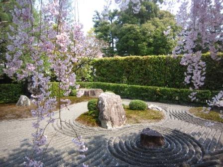 桜退蔵院IMG_8244 - コピー