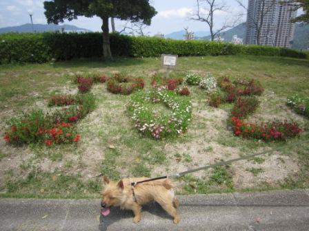 広域公園IMG_8457 - コピー