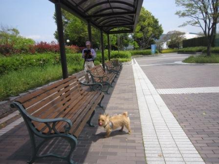 広域公園IMG_8459 - コピー