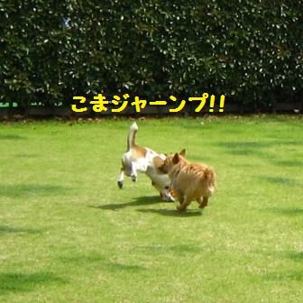 こまちゃん14・5IMG_8548 - コピー