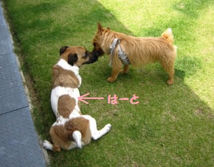 こまちゃん14・5IMG_8567 - コピー