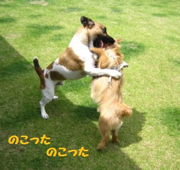 こまちゃん14・5IMG_8570 - コピー