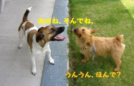 こまちゃん14・5IMG_8573 - コピー