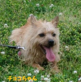 チョコ湘南22014-06-01_048_(640x480) - コピー