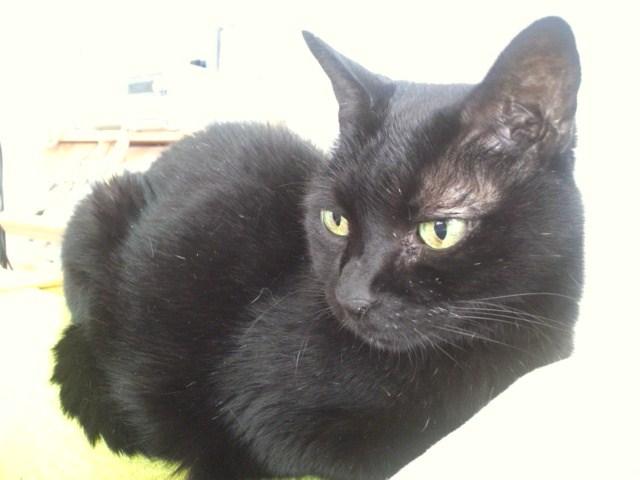 黒猫プッチー