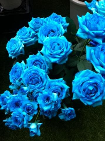 rose04202.jpg