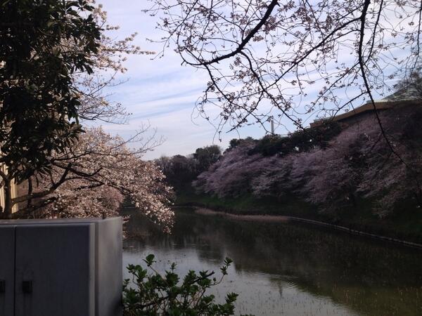武道館 桜