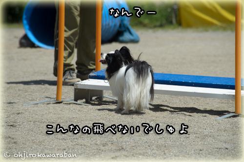 *15-DSC_9785