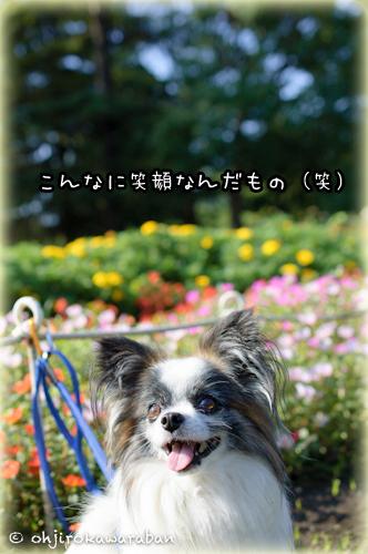 16*17-DSC_3904
