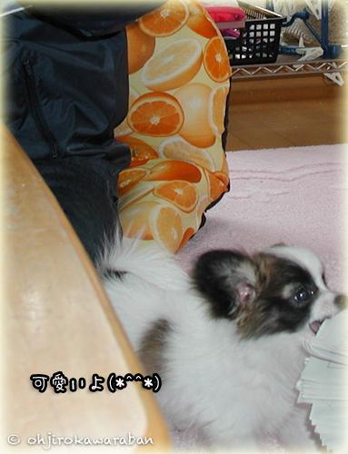 28*29-虎太郎と鷹次郎と父1