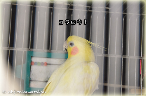 36*4-DSC_0779
