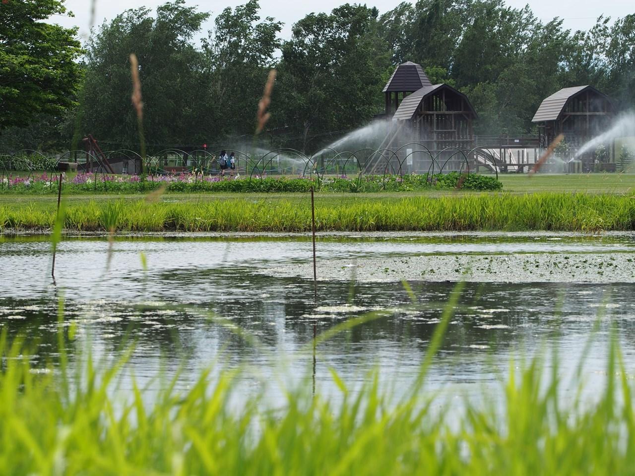 「さとの池」の向こうに見える木製遊具