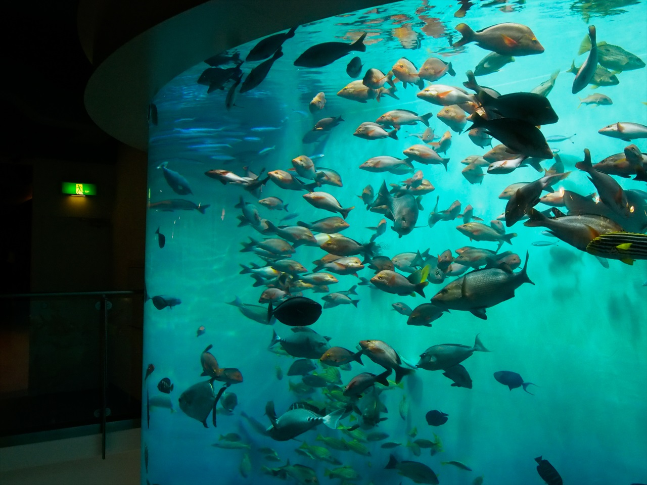 クリスタルタワーを泳ぐ魚達